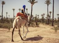 Justine Jugnet - Femme Portrait Test Agence Book Dromadaire Chameau Palmier Mannequin Marrakech Mode - Edito Magazine - Studio le carre