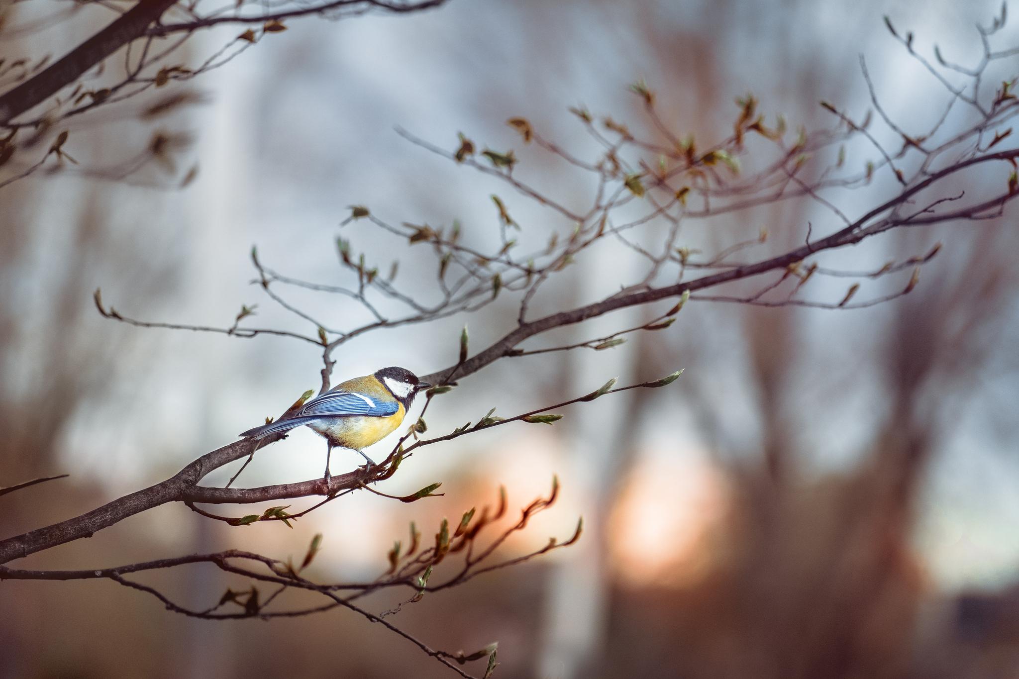 Etienne Regis Photographe à Toulouse, bird, first birds, oiseau, premiers oiseaux, branche, fleurs, natural, natural light, colours, lumière naturelle, extérieur, sun