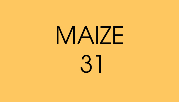 maize 31 fond papier BD location Studio Photo/video Lyon
